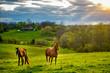 Leinwandbild Motiv Horses on a pasture in Kentucky