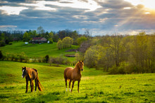 Horses On A Pasture In Kentucky