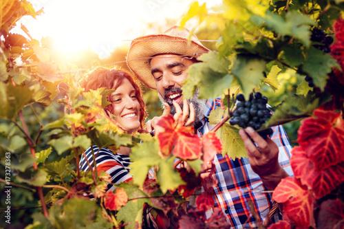 Papiers peints Vignoble Vineyard Harvest