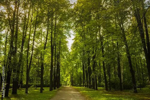 Trail in the park © Victor Goncharov