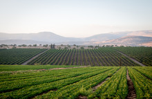 View Of The Golan Heights In The Summer .
