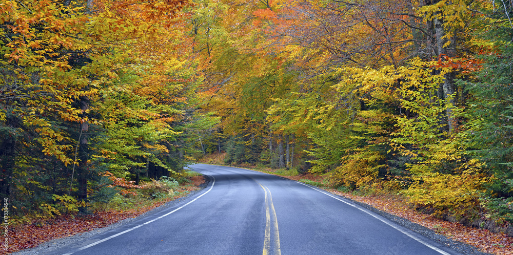 Fototapety, obrazy: Autumn foliage, road through the forest in Fall colors