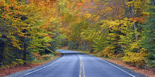 Autumn Foliage, Road Through T...