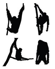 Vector Orangutan Collection In...