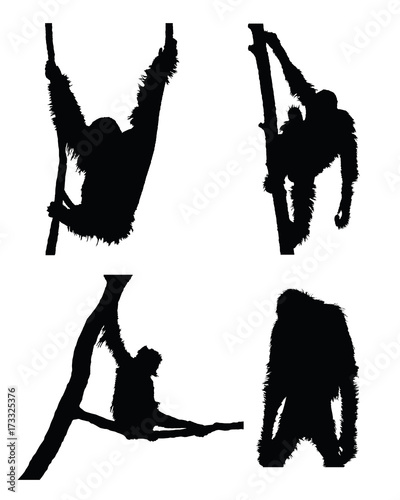 Vector orangutan collection in different positions on white background. Fotomurales