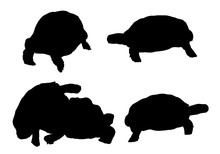 Vector Turtles Collection In Different Positions On White Background.