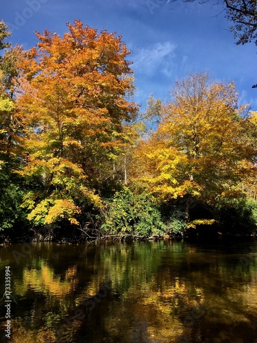 Foto op Canvas Bomen fall