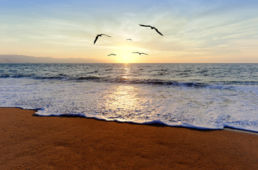 FototapetaOcean Sunset Birds