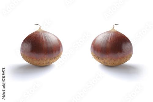 Japanese fresh chestnut isolated