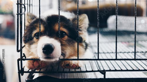 Fotografie, Obraz  Puppy in cage dog with sadness