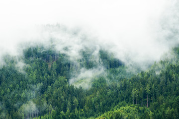 Fototapeta Do sypialni Forest in mist, low clouds in conifers, Austrian alps