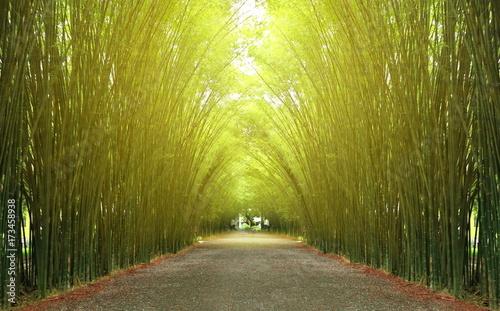 Bamboo tunnel Nakhon Nayok