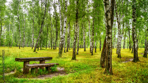 Foto op Plexiglas Landschappen Birch grove with a bench and table on sunny summer day, landscape