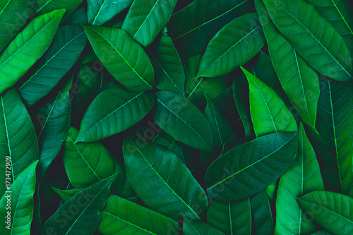 Spoed Foto op Canvas Natuur Creative layout made of green leaves. Flat lay. Nature background