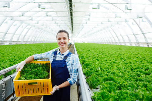 Successful young agro-engineer woth box of fresh lettuce preparing it for market Canvas Print