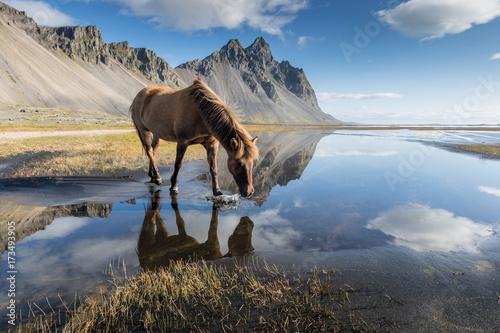 Fototapeta Magica Islanda / un cavallo si riflette nel favoloso paesaggio obraz