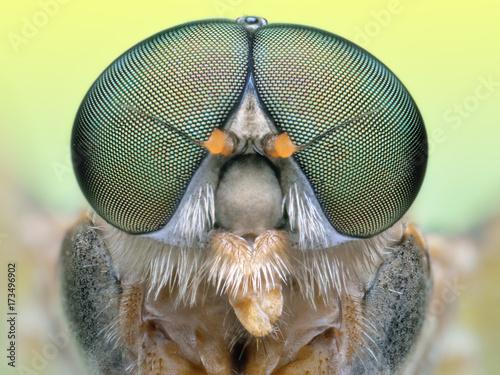 In de dag Macrofotografie Extreme portrait macro of polish green fly