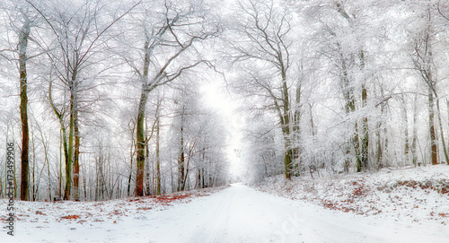 Fotobehang Wit Winter landscape. Winter road and trees covered with snow