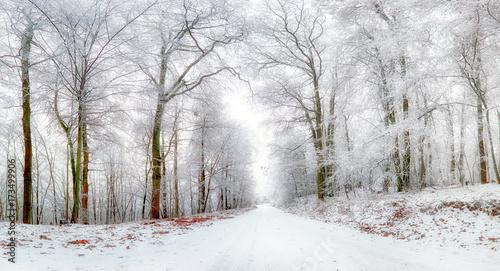 zimowy-krajobraz-zimowa-droga-i-drzewa-pokryte-sniegiem