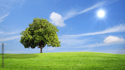Tuinposter Bomen Green grass and tree with clouds background, green concept.
