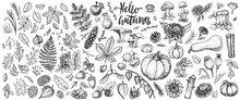 Autumn Plants Vector Sketches....