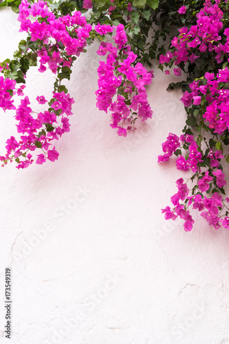 Papel de parede beautiful bougainvillea flowers on typical spanish house - white wall background