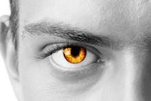Macro Shot Of Amber Man's Eye, Black And White