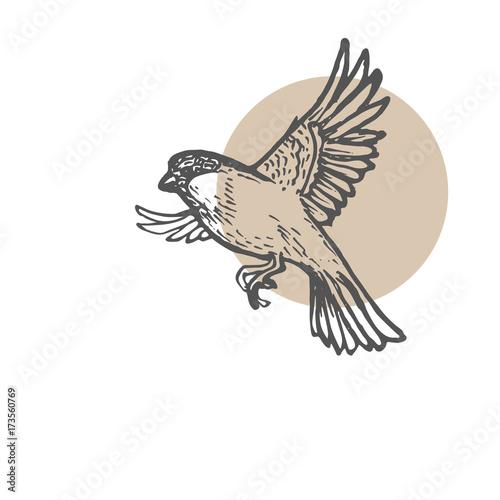 Valokuva  Sparrow birds sketch background