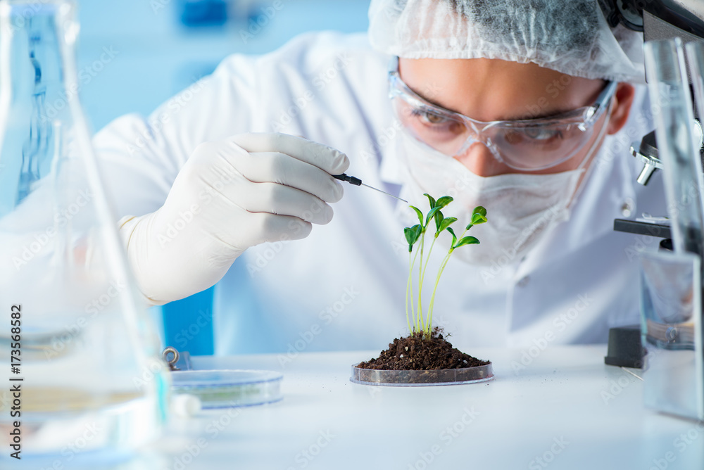 Fototapeta Biotechnology concept with scientist in lab