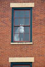 White Horse Mannequin In The W...