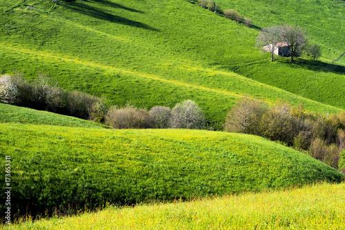 Papiers peints Morning Glory Green Hills