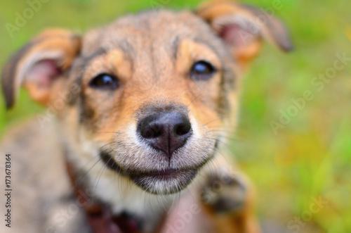 Stampa su Tela Portrait of a smiling dog