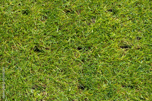 lawn with holes on a football field after aerating Tapéta, Fotótapéta
