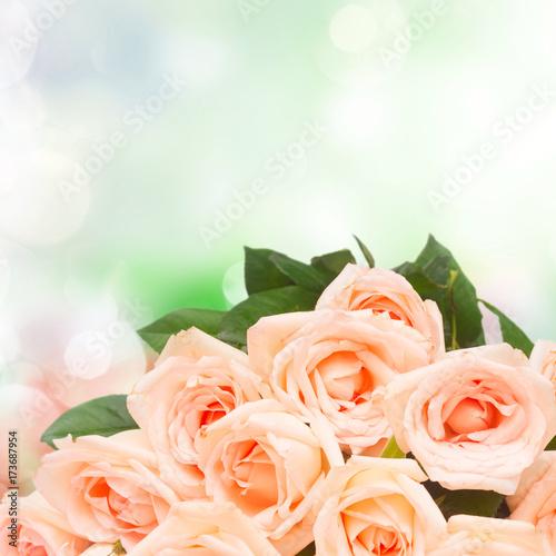 Plakat Wiązka różowi kwitnący świezi róża kwiaty zamyka up na ogrodowym bokeh tle