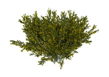 3D Rendering Creosote Bush On ...