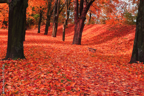 Poster Corail red autumn park