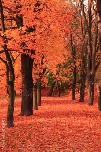 Foto op Aluminium Koraal path in the autumn park