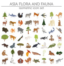 Isometric 3d Asian Flora And F...