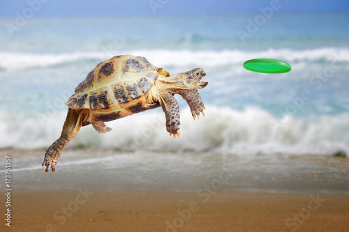 Foto op Canvas Schildpad Turtle jumps and catches the frisbee