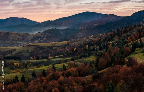 Poster Marron chocolat forest on hills in mountainous countryside at dawn