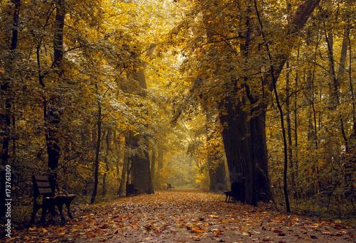 Foto op Plexiglas Landschappen Beautiful autumn forest landscape. Road autumn forest. Photo stock.