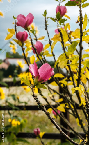 Zdjęcie XXL Jesienne kwiaty w ogrodzie