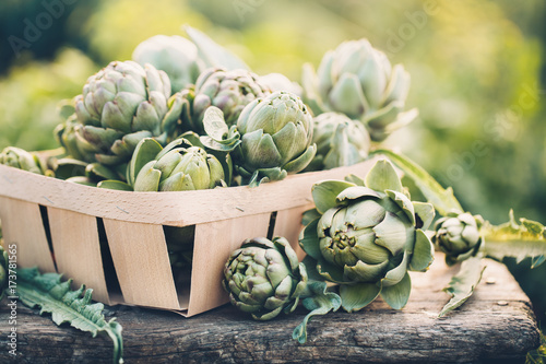 Photo Freshly harvested artichokes in a garden