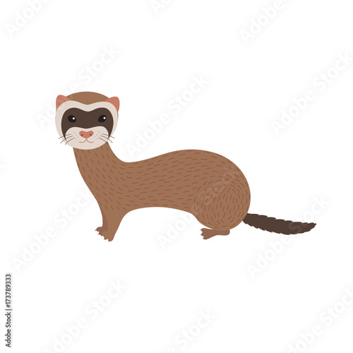 Fotografija  Vector illustration of ferret . Smiling cartoon character.