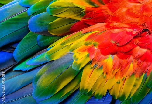 Photo Close up of Scarlet macaw bird's feathers, exotic nature background and texture
