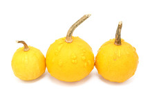 Three Round Orange Ornamental Gourds With Warty Lumps