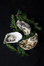 Three Oysters On A Black Backg...