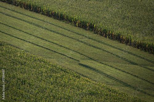 Vászonkép Aerial view of corn field farmland