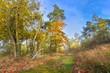 Wanderweg im malerischen Herbstwald