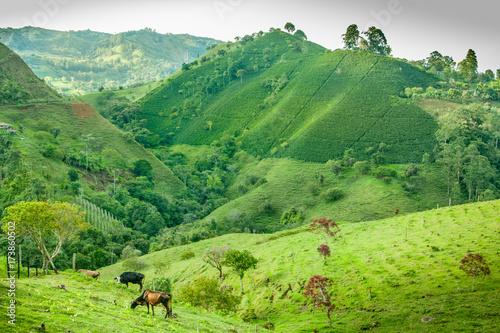 In de dag Lime groen Coffee Plantation in Jerico Colombia